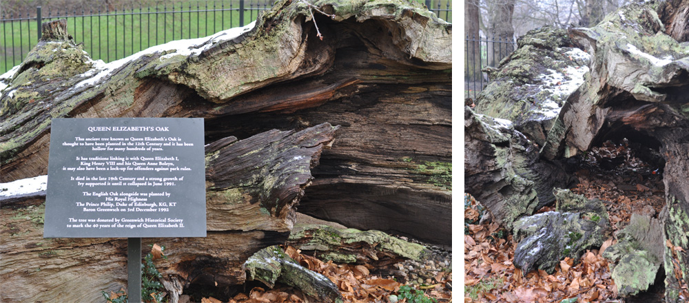The-Mayfairy-Greenwich-Queen Elizabeth's Oak